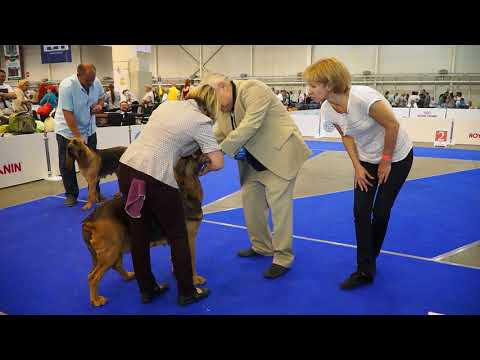 Euro Dog Show 2017 Bloodhound