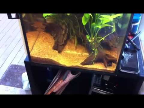 No maintenance fish tank tv my no maintenance aquael for Cloudy water in fish tank solutions
