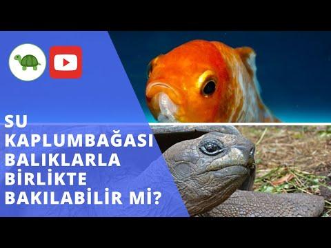 SU KAPLUMBAĞASI BALIKLA YAŞAR MI ? - Balıklarla BİRLİKTE Bakımı