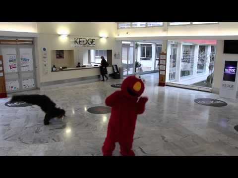 Harlem Shake Alternative - KEDGE Business School
