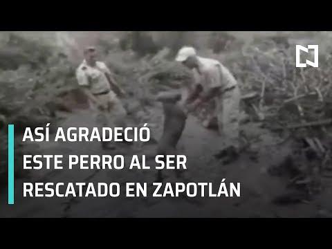 Desbordamiento de río en Jalisco; rescatan a perro en Zapotlán, Jalisco - Hora 21