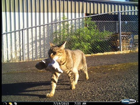 Cat steals marijuana and brings it to police