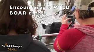 Wild Boar Loves Eating Marshmallows, and Surprises Viewers at the End!