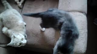 В гостях у кошек. Часть 2.
