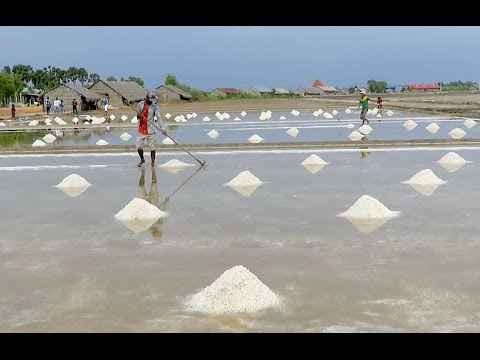 Salt Fields at Kep Province - Tourist Attraction in Cambodia