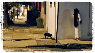 ЛУЧШИЕ ПРИКОЛОВ С ЖИВОТНЫМИ - ПОДБОРКА | BEST FUNNY ANIMALS - COMPILATION #548