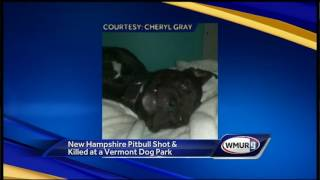 Pit bull shot, killed by off-duty police officer in Vermont