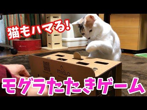 猫と一緒に遊べるモグラたたきゲームでぽてとと遊んでみた