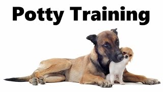 How To Potty Train A Belgian Malinois Puppy - Belgian Malinois Training - Belgian Malinois Puppies
