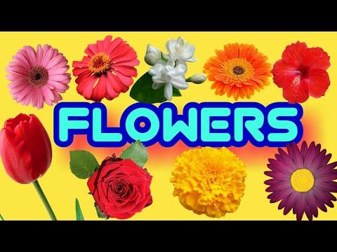 Flowers name in marathi । फुलांची नावे । fulanchi nave