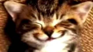 Миленький котик поздравляет с днем рождения