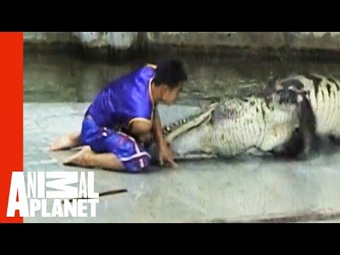 Man Caught In Crocodile Death Roll | Untamed \u0026 Uncut