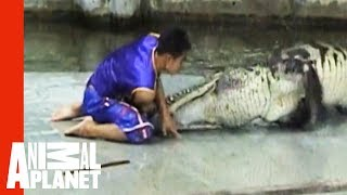 Crocodile Death Roll | Untamed and Uncut