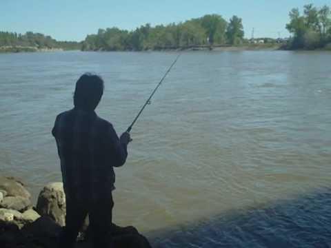 Urban Fishing USA: Yellowstone River Billings, Montana