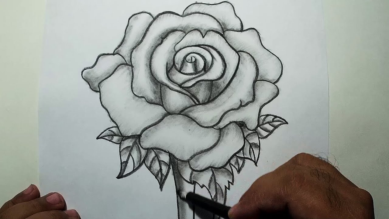 How to Draw A rose || Pencil Drawing and Shading - YouTube
