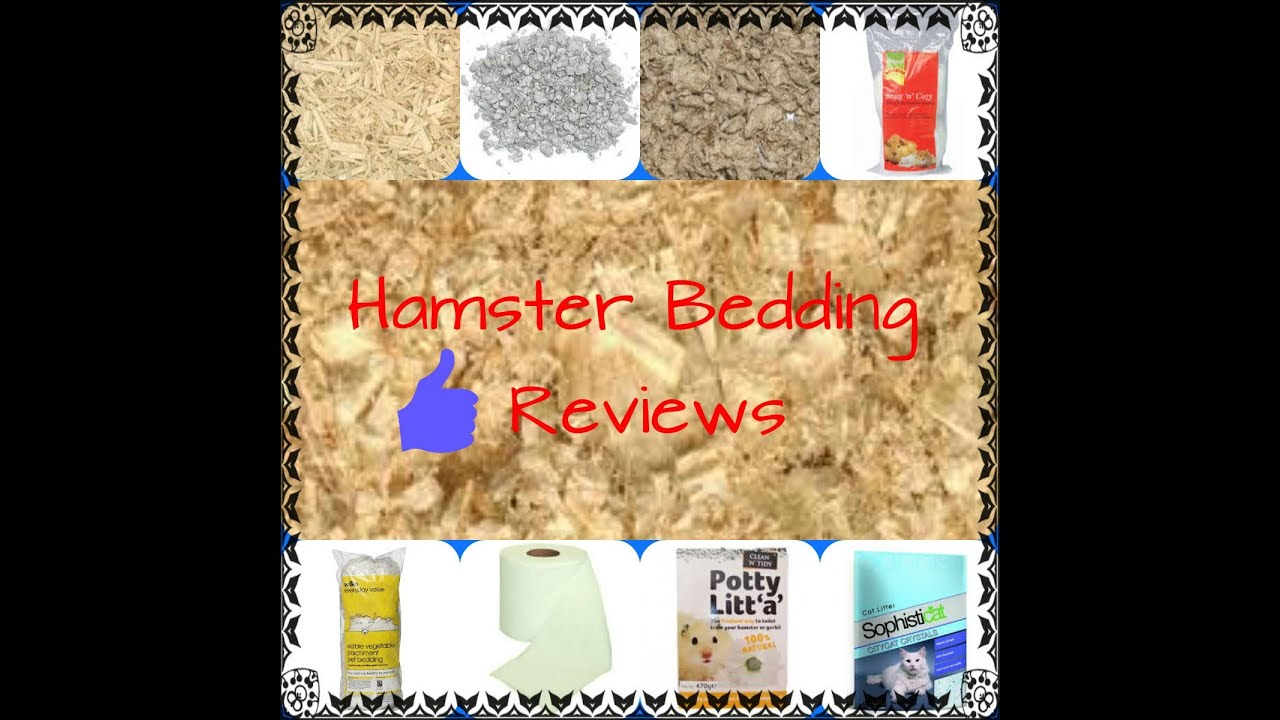 bedding hamsters bed hamster know much really playbuzz you do peach about how