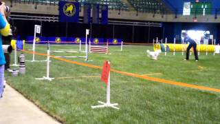 Poodle Club Of America-fast