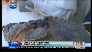 News : Venomous fish found in Mombasa