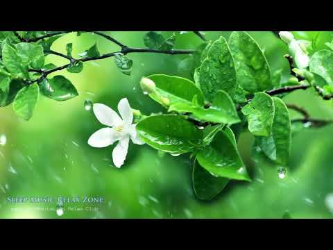 Music From Nature: Sounds Of Nature, Relaxing Music Walk Through Nature