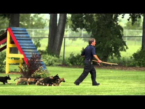 A Demonstration Of Police Dog Training