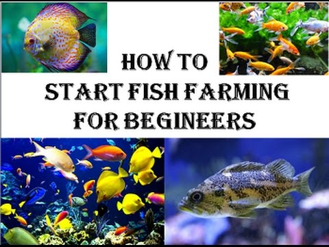 how to start fish farming for begineers agri