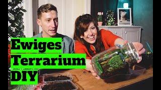 Wir bauen ein ewiges Terrarium - DIY