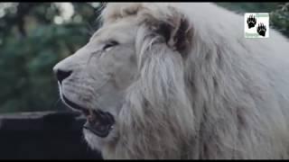 Детский сад для зверят 6 серия | Документальный фильм про животных