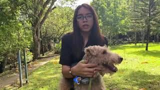 Raza Welsh Terrier  Zootecnia de Pequeñas Especies USAM 2021