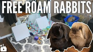 WHY MY RABBITS DON'T LIVE IN A CAGE