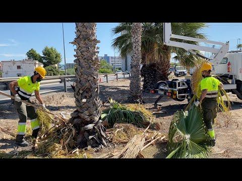 El Ayuntamiento acondiciona todos los accesos a Murcia