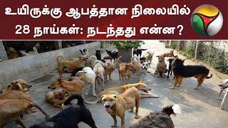 உயிருக்கு ஆபத்தான நிலையில் 28 நாய்கள்: நடந்தது என்ன? | Dogs