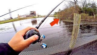 Power Plant Bass DESTROY Topwater Frogs!!