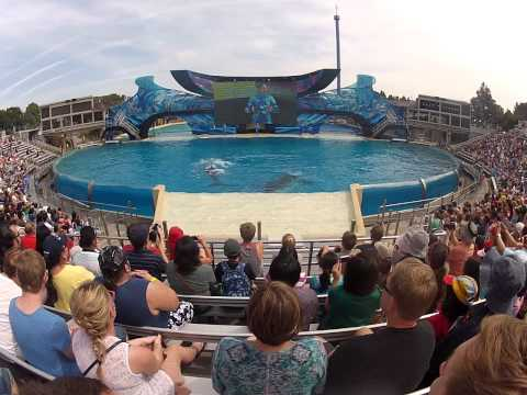 Show das baleias Sea World Travel Video