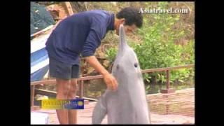 Pattaya Animal Fun, Thailand By Asiatravel.com