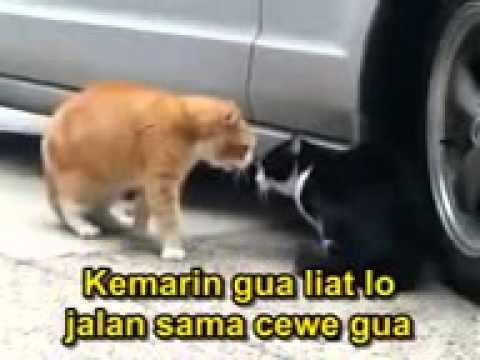 Dabing Lucu Kucing Marah Youtube