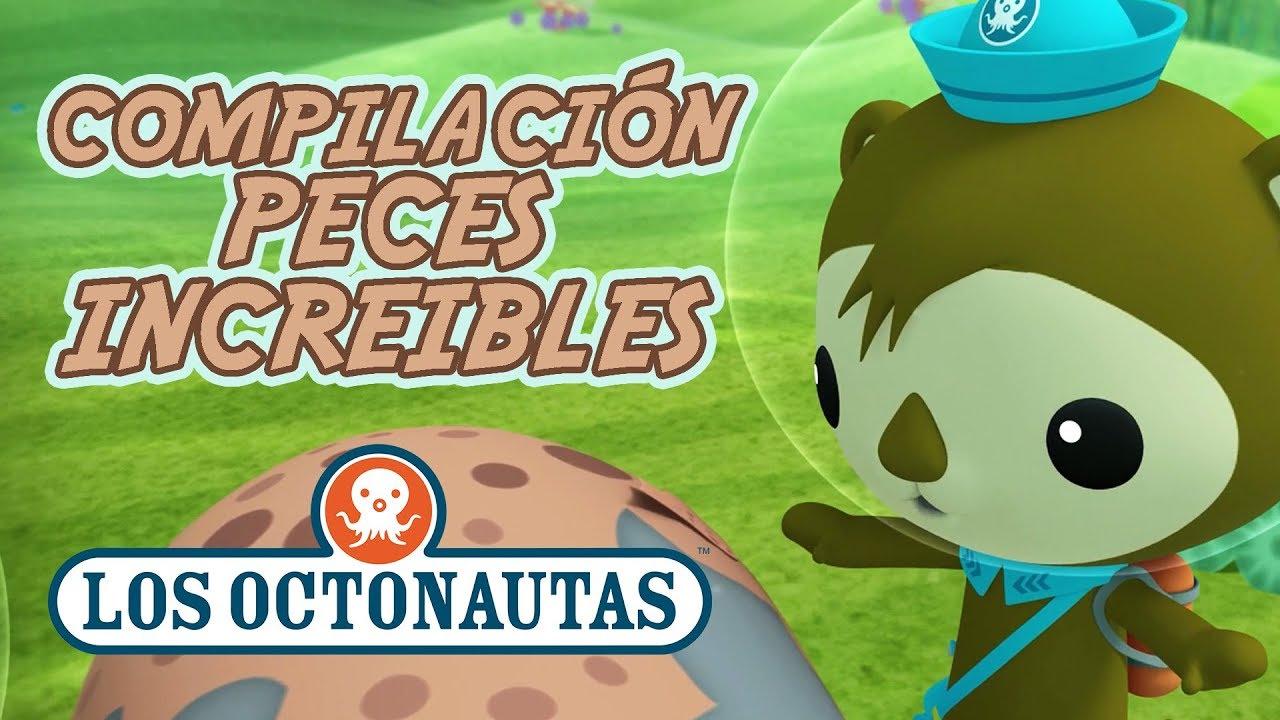 Los Octonautas Oficial En Español - Focas y parientes | Increíbles Animales Del Mar