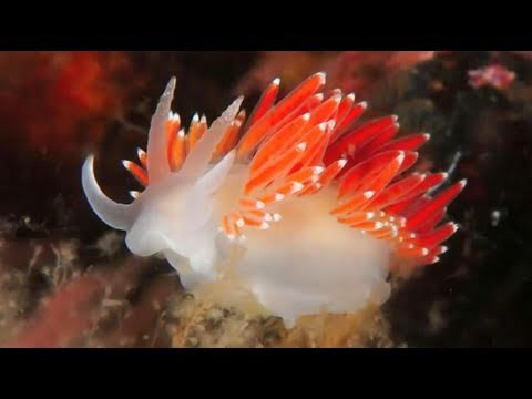 Exploring Marine Life in the Baltic Sea: Oceana Expedition 2011