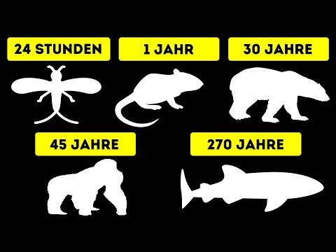 Die kürzesten und längsten Lebenserwartungen von Tieren