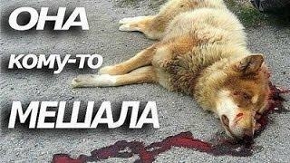 Топ 10 бедных и бездомных животных!
