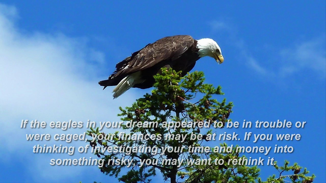 Eagle dream meaning youtube eagle dream meaning biocorpaavc