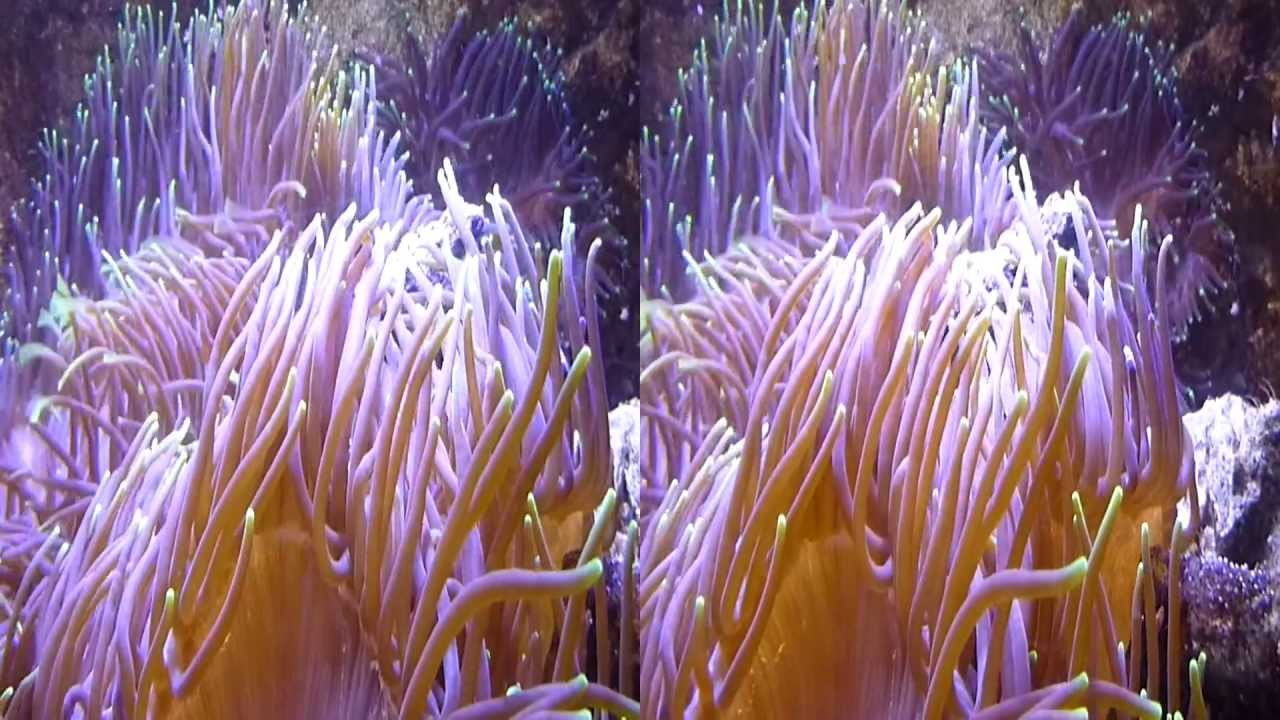 Underwater Plants 3D (YT3D:Enable=True) - YouTube