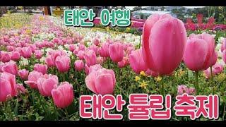 2020 태안 세계 튤립 축제 -헬기 근접 촬영 영상?…