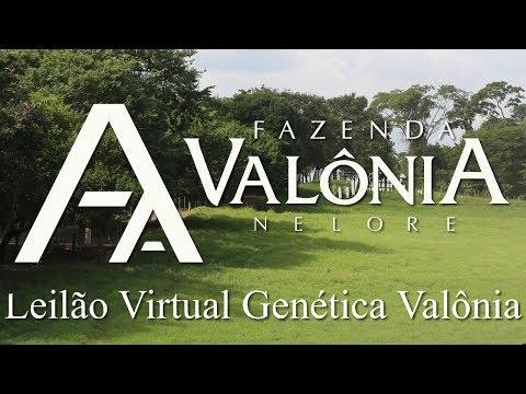 Lote 17 (Platinado FIV da Valônia - JAA 5196)
