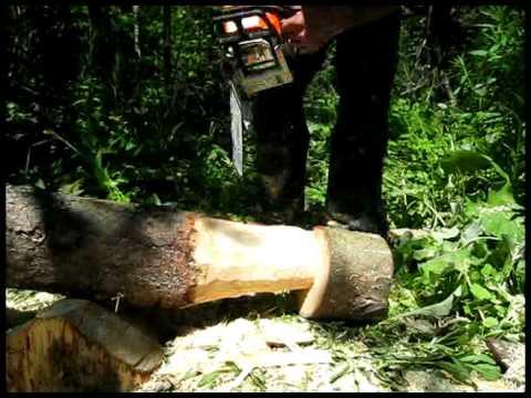 Simple oak bench cedar chair and first mushroom chainsaw