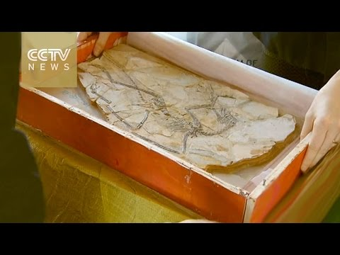 US repatriates dinosaur fossil, cultural artifacts to China