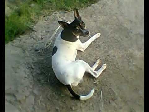 el perro los jaguares de la sierra