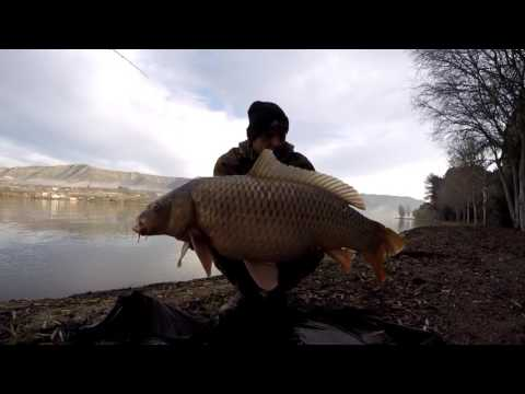 Carpfishing On The River Ebro January 2016 - Zsolt Bundik