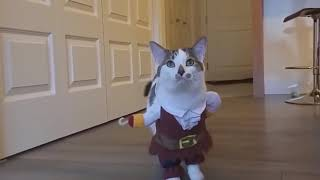 TOP 100 Pets And Funny Costumes Compilation 2017