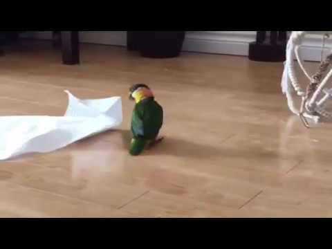 Little Bird Plays With Paper Towel