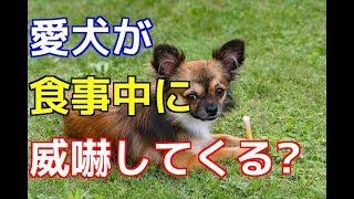 チャンネル登録はこちらからも可能です☆→http://ur0.pw/Gf0q 愛犬に食事...